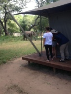 10 éléphant proches