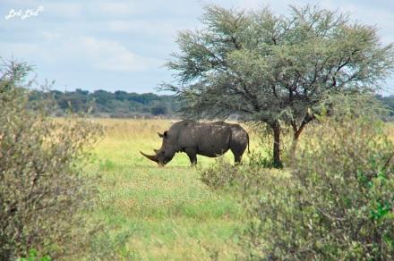 4 rhino 1