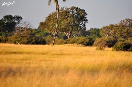 5 guépard termitière