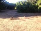 7 chobe safari lodge (7)
