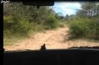 9 route khama rhino (2)