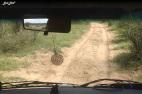 9 route khama rhino (3)