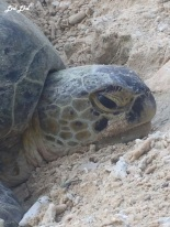 10 tortue (1)