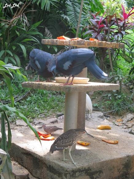 11 bird park (3)