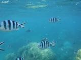 3 snorkeling (10)