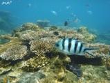 3 snorkeling (13)