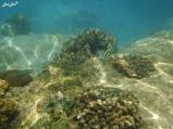 3 snorkeling (3)