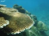 3 snorkeling (4)