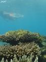 3 snorkeling (6)