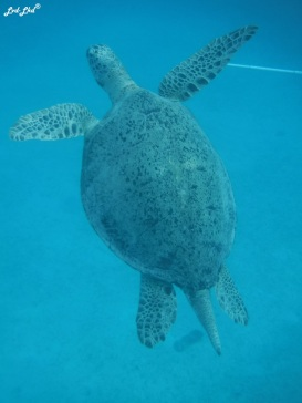 3 snorkeling (7)