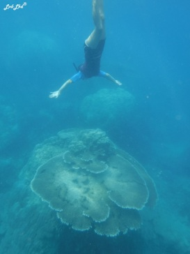 3 snorkeling (8)