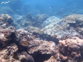 6 plage et corail (3)