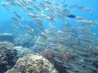 6 plage et corail (5)