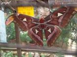 7 butterfly farm (3)
