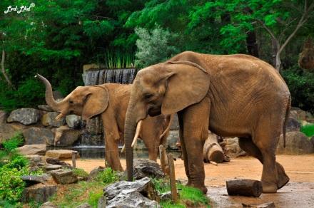 16 éléphant